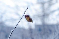Gefrorenes Blatt auf der Niederlassung unter der Frost Landschaft mit Kopie s Stockbilder