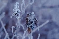 Gefrorenes Blatt auf der Niederlassung unter der Frost Landschaft mit Kopie s Lizenzfreies Stockfoto