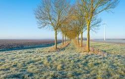 Gefrorenes Feld im Winter Stockbild