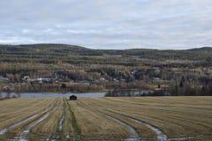 Gefrorenes Feld mit Bahnen des Erntens Stockbilder