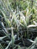 Gefrorenes Gras Stockbild