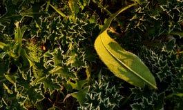 Gefrorenes Gras stockbilder