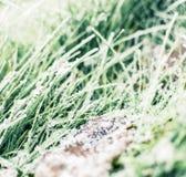 Gefrorenes Gras Lizenzfreie Stockbilder
