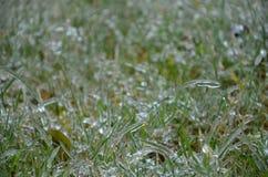 Gefrorenes Gras lizenzfreies stockbild