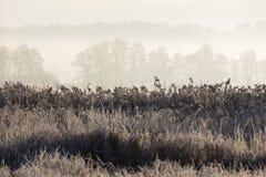 Gefrorenes Gras auf einem einfrierenden Wintermorgen mit Bäumen im backgroud Stockbilder