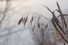 Gefrorenes Gras auf Winter Lizenzfreies Stockfoto