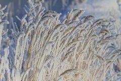 Gefrorenes Gras belichtete Wintersonne stockbilder