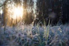 Gefrorenes Gras an der Dämmerung Lizenzfreies Stockfoto
