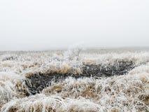 Gefrorenes Gras und Baum im Winter Stockbilder