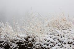 Gefrorenes nardus stricta Gras während des Winters Lizenzfreie Stockfotografie