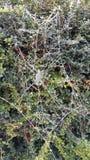 Gefrorenes spider& x27; s-Netz Stockbild