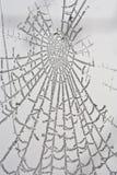 Gefrorenes Spiderweb stockfoto