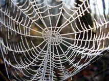 Gefrorenes Spinnennetz Stockfotos