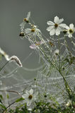 Gefrorenes Spinnenweb Lizenzfreies Stockfoto