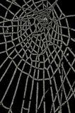 Gefrorenes Spinnenweb getrennt auf Schwarzem Lizenzfreie Stockfotos