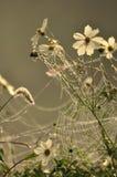 Gefrorenes Spinnenweb mit Blumen Stockfoto
