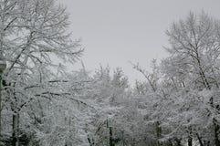 Gefrorenes treas ` ein perfektes Winterstadtpark-Baumbild lizenzfreies stockfoto