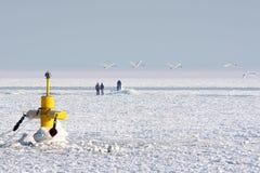 Gefrorenes Winterarktiswasser   Stockfotos