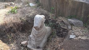 Gefundene Schatz Statue eines Stiers stock footage