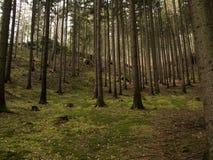 Gegangen in Wald Lizenzfreie Stockfotografie