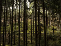 Gegangen in Wald Lizenzfreie Stockfotos