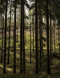 Gegangen in Wald Lizenzfreies Stockfoto