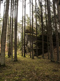 Gegangen in Wald Stockbilder