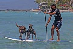 Gegangen zu den Hunden Lizenzfreie Stockfotografie