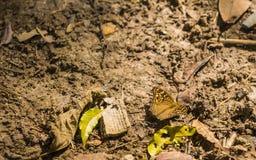 Gegenüberstellen mit Schmetterling auf Feld Stockbild