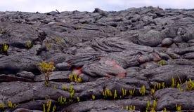 Gegenwärtige Lava auf der Erdoberfläche Flüssige Lava stockbild