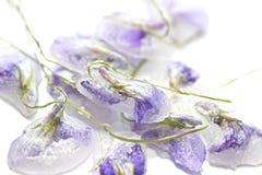 Geglaceerde violette bloemen Stock Foto's