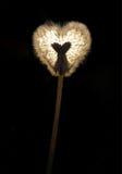 Geglanste paardebloem in de vorm van hart Royalty-vrije Stock Afbeeldingen