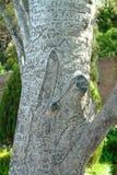 Gegraveerde boom Stock Foto's
