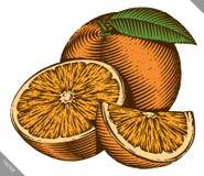 Gegraveerde geïsoleerde kleuren vectorillustratie van een sinaasappel Stock Fotografie