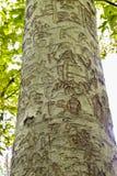 GEGRAVEERDE STRANDboom stock foto's