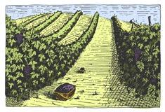 Gegraveerde wijnoogst, hand getrokken wijngaardenlandschap, tuskany gebieden, het oude kijken scratchboard of tatooostijl royalty-vrije illustratie