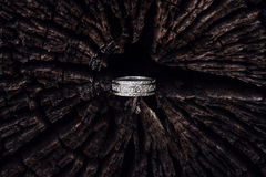 Gehämmerter silberner Ring im Baum lizenzfreies stockbild