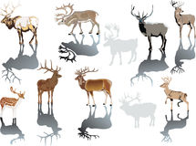 Gehörnte deers mit Reflexion Stockbilder