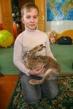 Gehaalde europaeus van hazenlepus Stock Foto