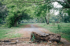 Gehackt hinunter Baum lizenzfreie stockfotografie