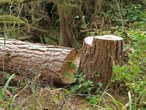 Gehackt hinunter Baum. lizenzfreie stockbilder