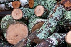 Gehackt hinunter Baum mit Moos Lizenzfreies Stockbild