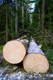 Gehackte Bäume Lizenzfreies Stockbild