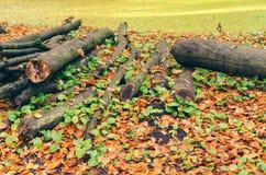 Gehackte Baumstämme, die im Herbstlaub liegen Lizenzfreie Stockfotos