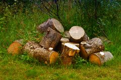 Gehacktes Holz Stockbild