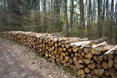 Gehakt hout in bos Royalty-vrije Stock Fotografie