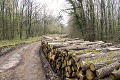 Gehakt hout in bos Stock Afbeelding