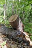 Gehakt op login het hout stock afbeelding