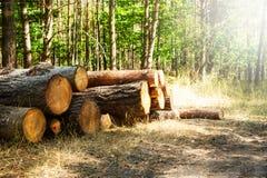 Gehakte die boomlogboeken in een stapel worden gestapeld Stock Foto