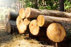 Gehakte die boomlogboeken in een stapel worden gestapeld Stock Afbeelding